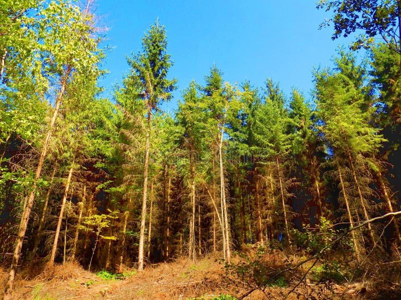 狂放的自然的混杂的森林 免版税库存图片