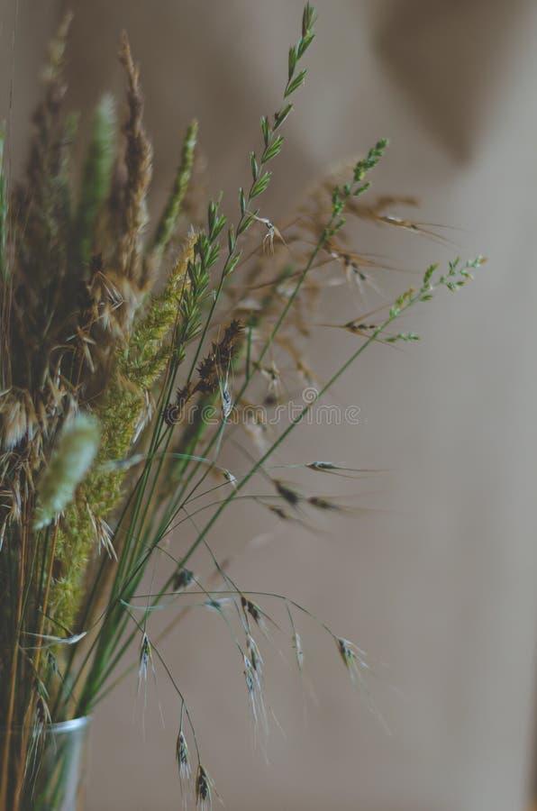 狂放的草本和花花束  在右下角的自由范围 r 深绿褐色绿色 免版税库存照片
