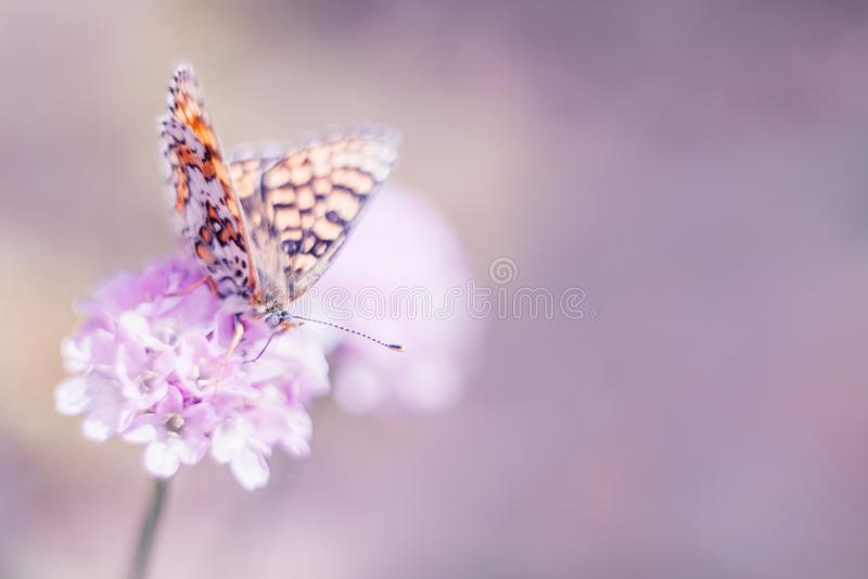 狂放的草甸、蝴蝶和开花的花自然宏指令 与拷贝空间的淡色背景 软绵绵地集中 免版税库存照片