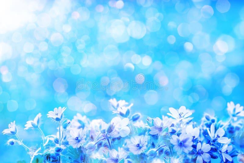 狂放的草甸开花ans的春天弄脏了与bokeh,宏观,软的焦点的蓝色背景天空 皇族释放例证
