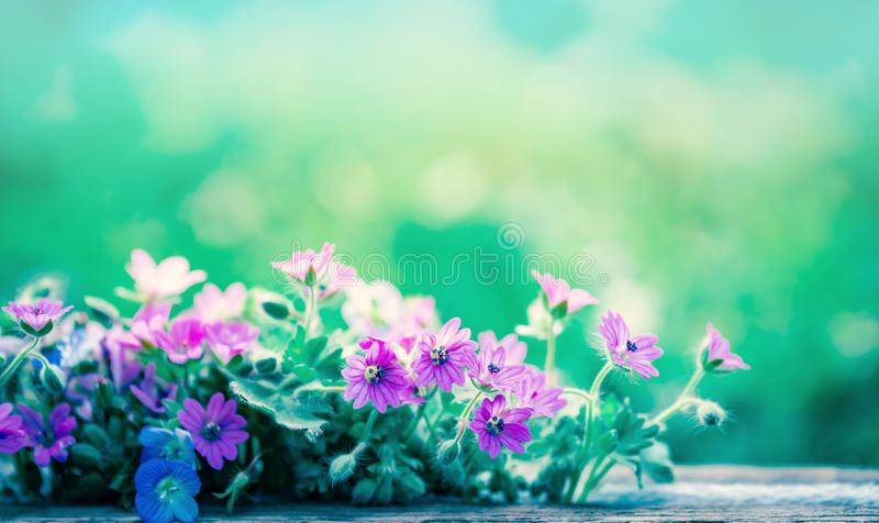 狂放的草甸开花ans的春天弄脏了与bokeh,宏观,软的焦点的蓝色背景天空 库存照片