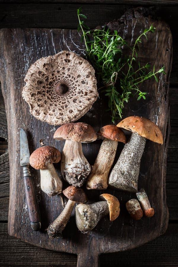 狂放的蘑菇和草本的混合 库存图片