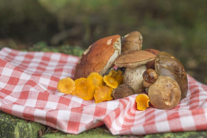 Download 狂放的蘑菇收获在方格的桌布的 库存照片. 图片 包括有 自然, 美食, 可食用, 本质, 工厂, 有机, 烹调 - 59102242