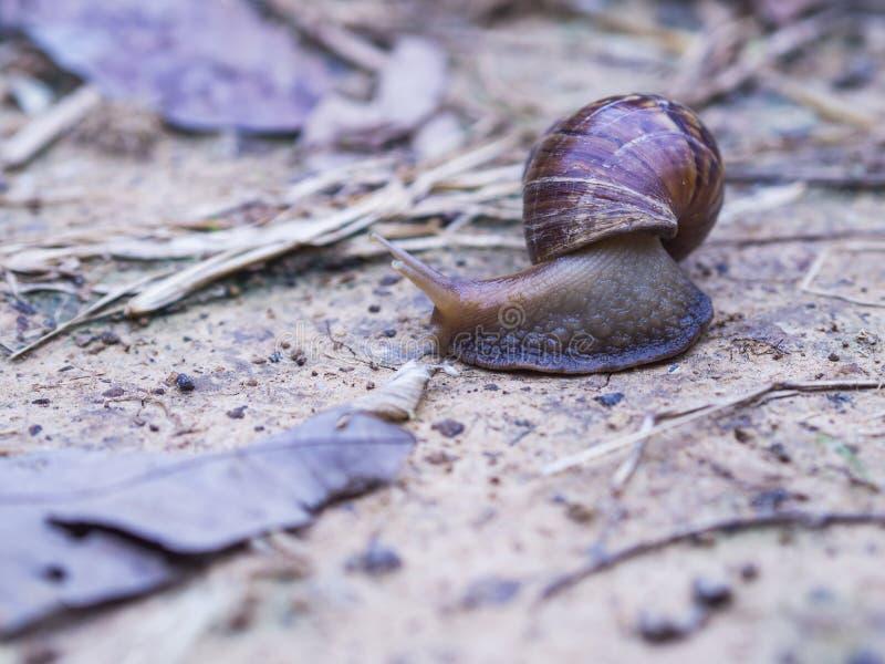 狂放的蜗牛, 库存图片