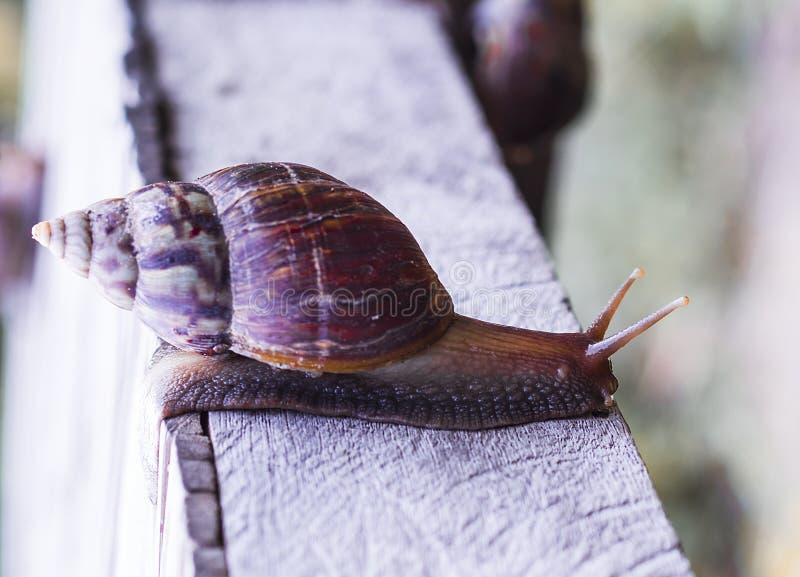 狂放的蜗牛, 库存照片
