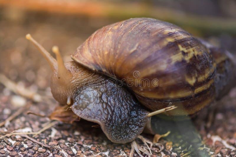狂放的蜗牛 库存图片
