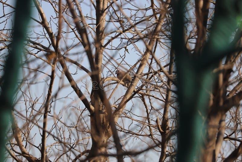 狂放的pigon在渤海TinaJin地区在一寒冷冬天天 库存图片