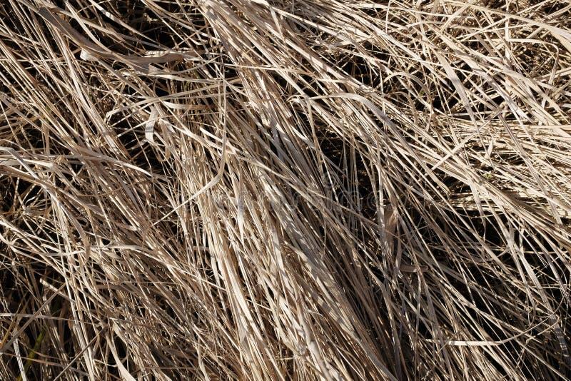 狂放,干燥洗刷在草甸 宏观看法 免版税库存图片
