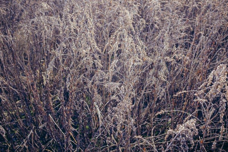 狂放,干燥洗刷在草甸 免版税库存照片
