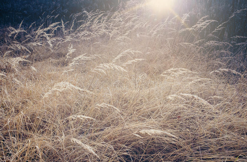 狂放,干燥洗刷在草甸 库存照片
