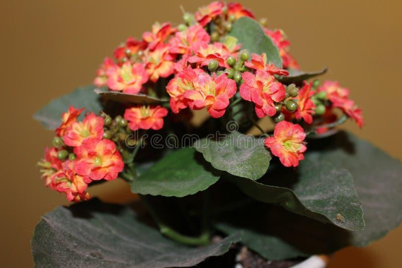 狂放,美丽的花花, 图库摄影