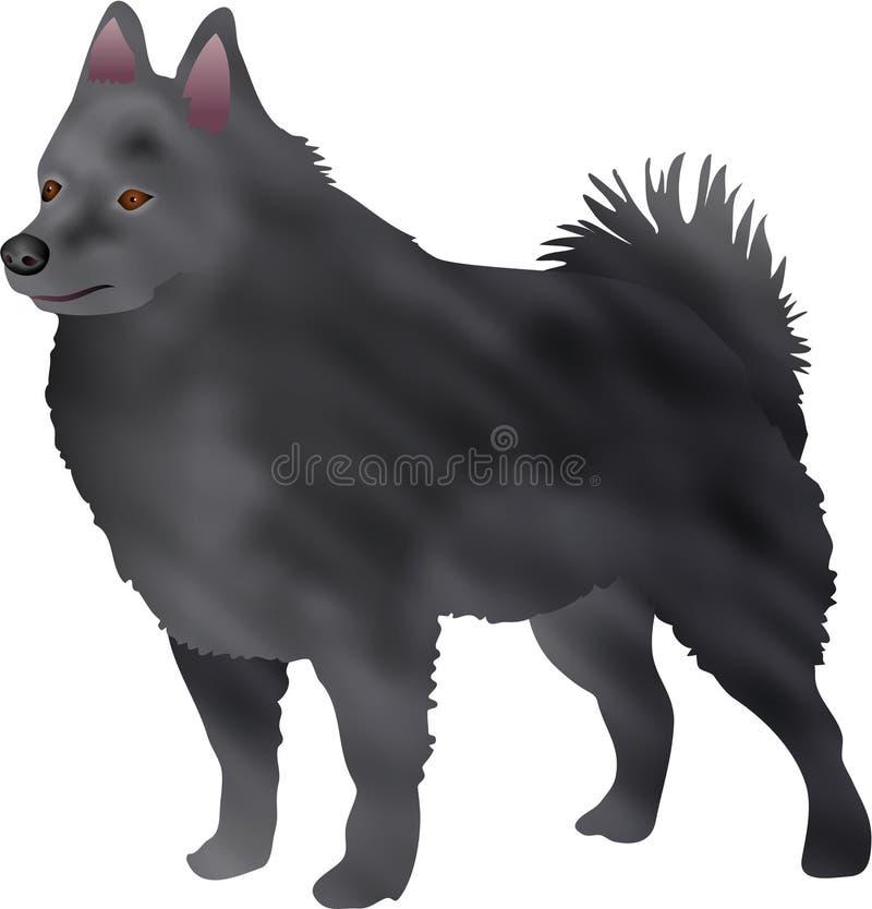 狐头竖耳无尾短毛小黑犬 库存照片