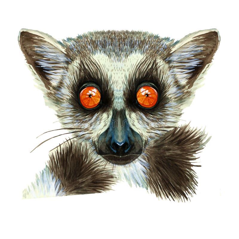 狐猴哺乳动物的动物水彩图画与大橙色眼睛的与头发和尾巴,狐猴画象,在白色背景fo 向量例证