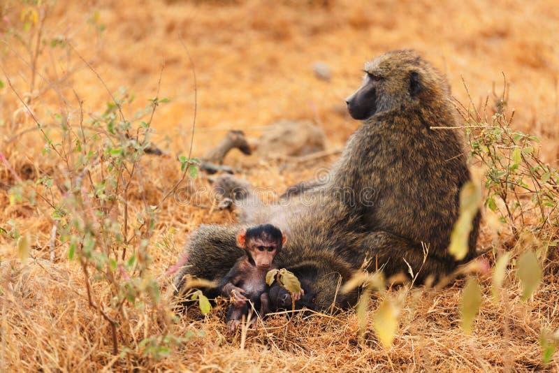 狒狒婴孩 图库摄影