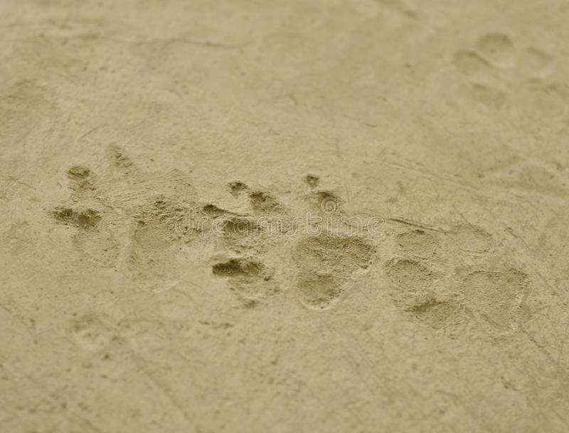狗's脚印 免版税库存图片