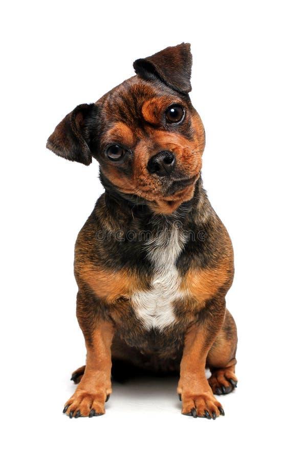 狗一点 免版税图库摄影