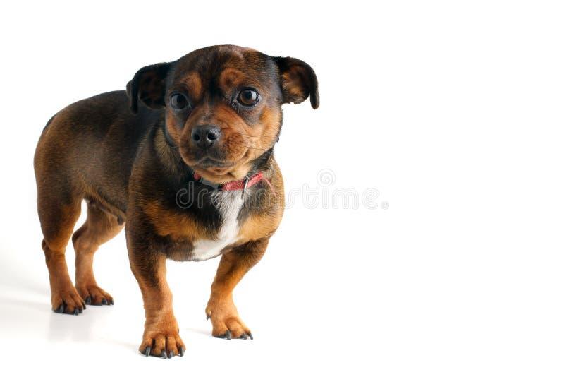 狗一点 免版税库存图片