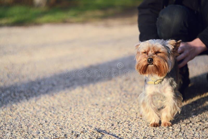狗一点 库存照片