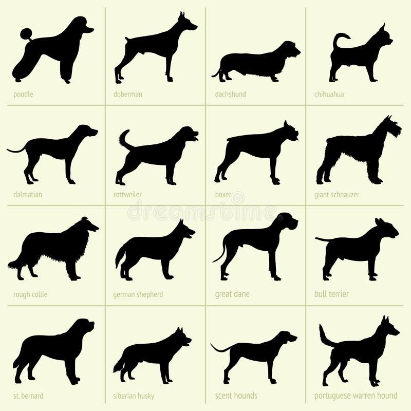狗不同的品种  库存例证