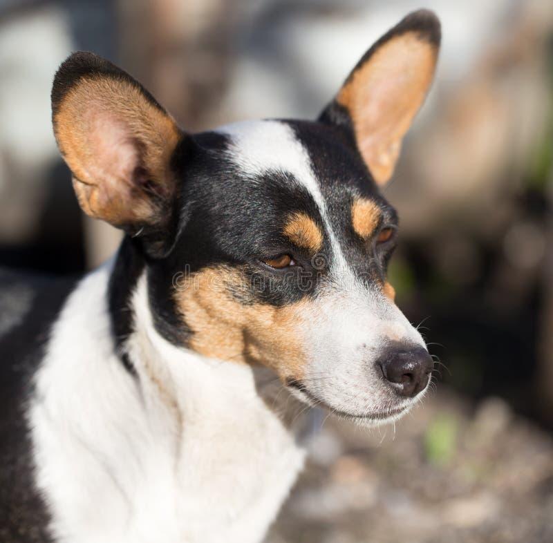 狗与斑点的` s面孔 免版税库存图片