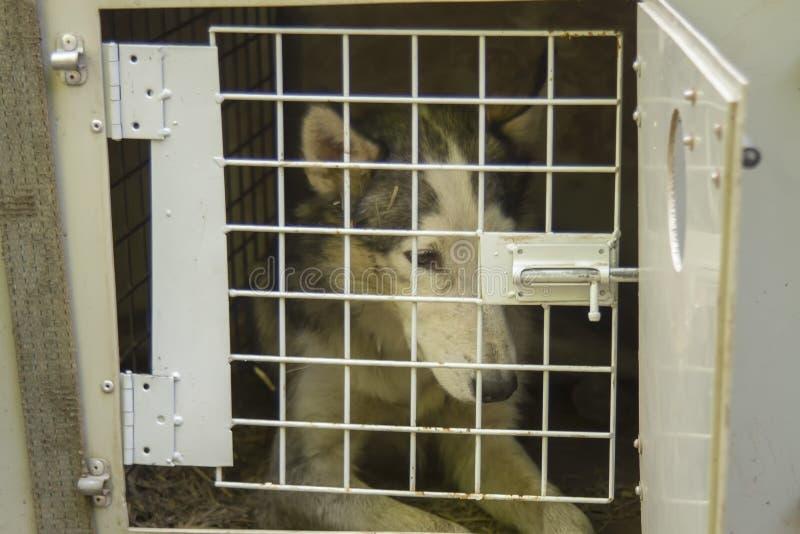 狗临时闭合在运输的笼子 免版税库存照片