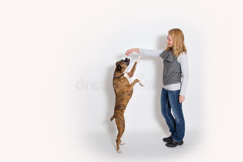 狗为款待坐直 免版税图库摄影