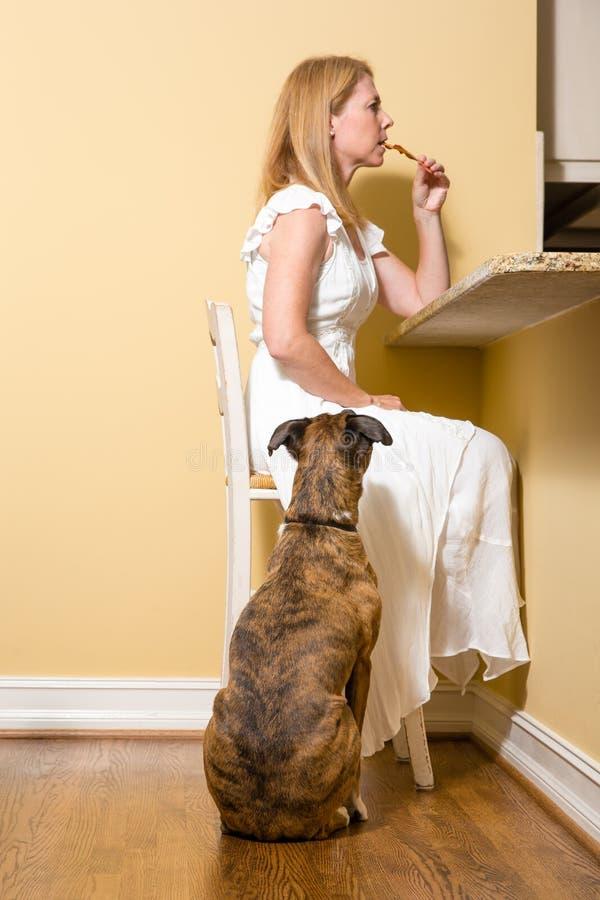 狗乞求为烟肉 免版税库存图片