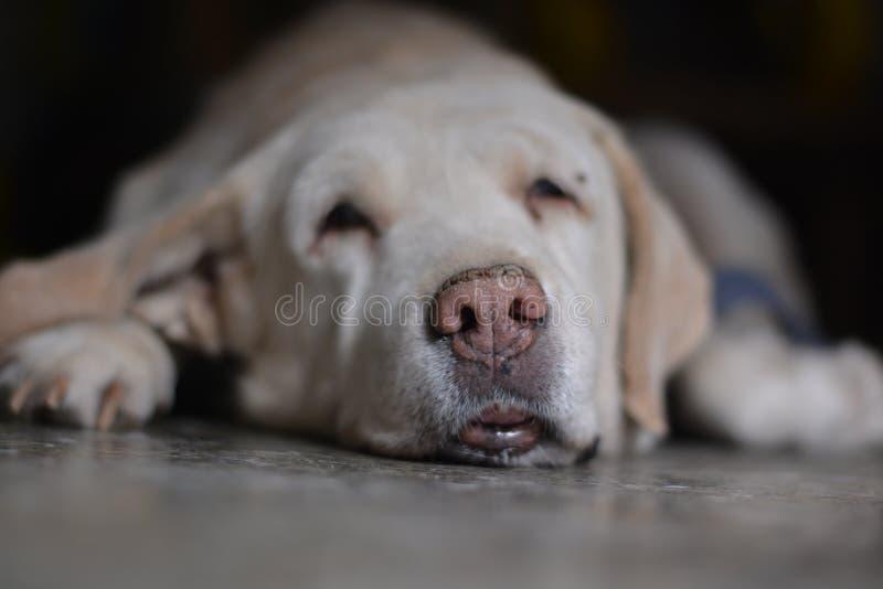 狗休息的照片 库存照片