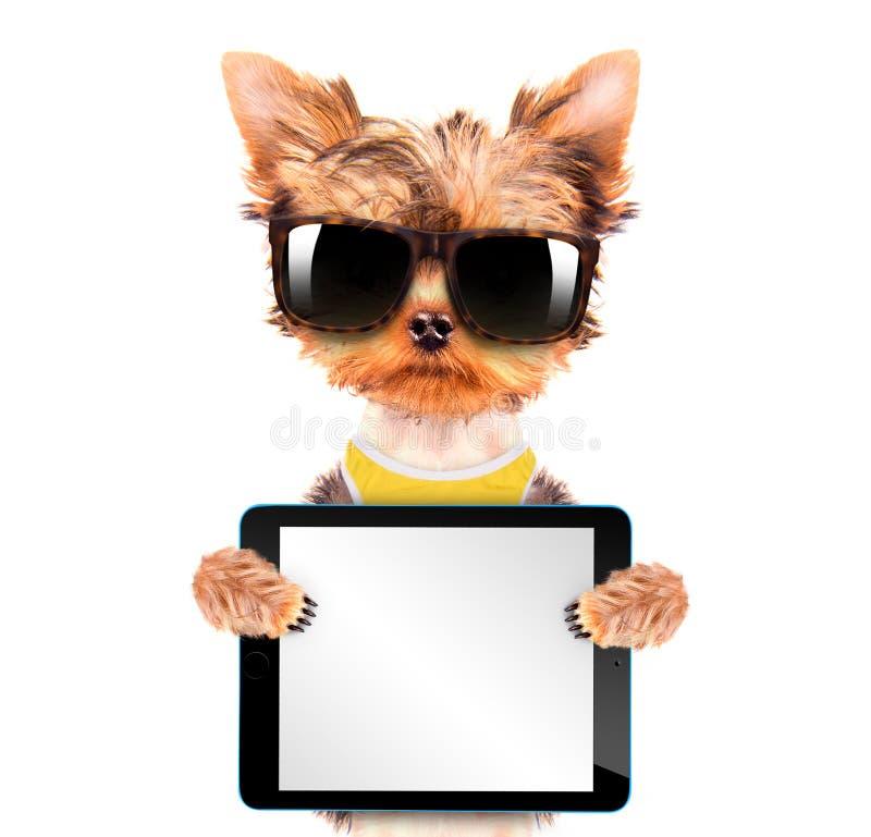 狗佩带与片剂个人计算机的树荫 库存图片