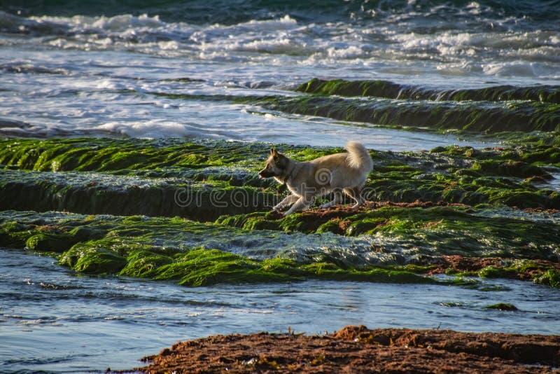 狗保持平衡跳进海 库存照片