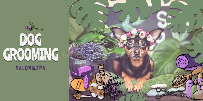 狗修饰沙龙和温泉海报,横幅 照片和例证,动画片样式 狗在温泉关心项目和植物中 库存例证