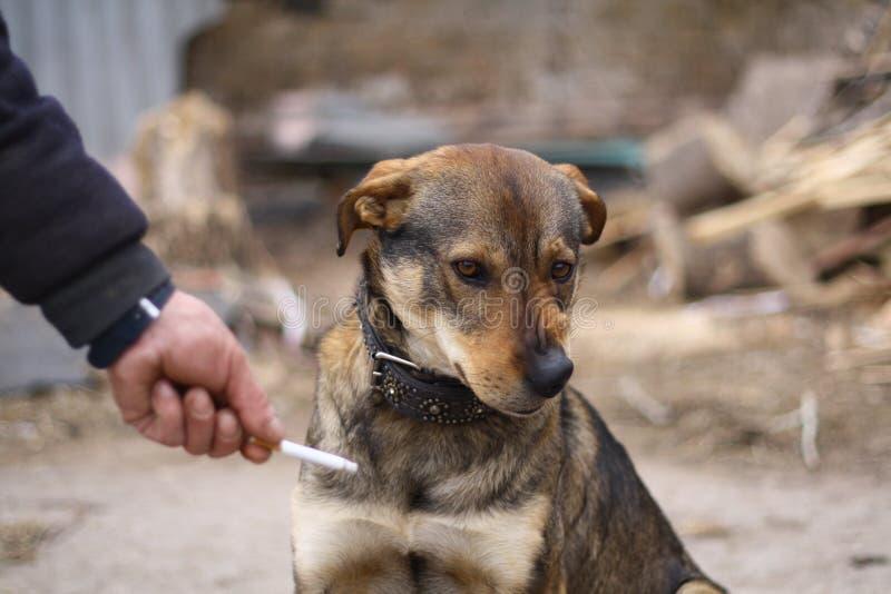 狗健康寿命抽烟的方式 免版税库存图片