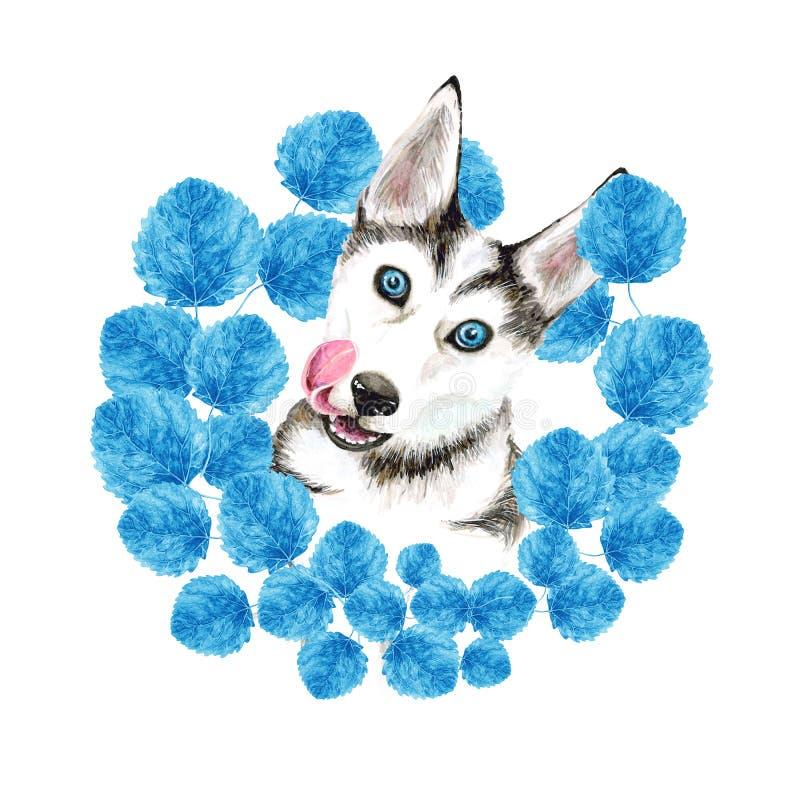 狗养殖爱斯基摩 与蓝眼睛的逗人喜爱的小狗 秋天 在蓝色叶子花圈  画象 查出的空白背景 库存例证