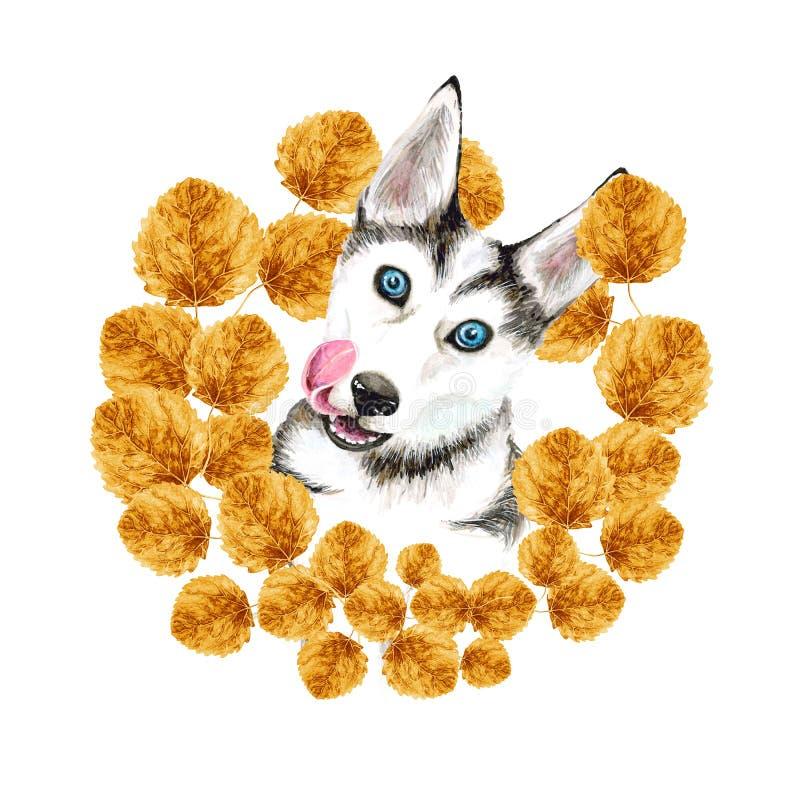 狗养殖爱斯基摩 与蓝眼睛的逗人喜爱的小狗 秋天 在金黄黄色叶子花圈  画象 皇族释放例证