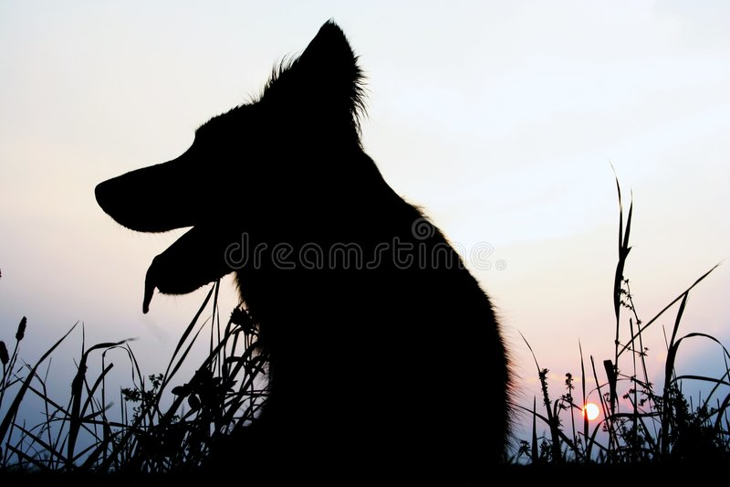 狗剪影 图库摄影