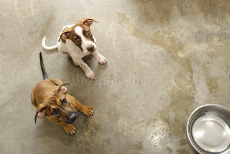 狗动物抢救避难所 库存照片