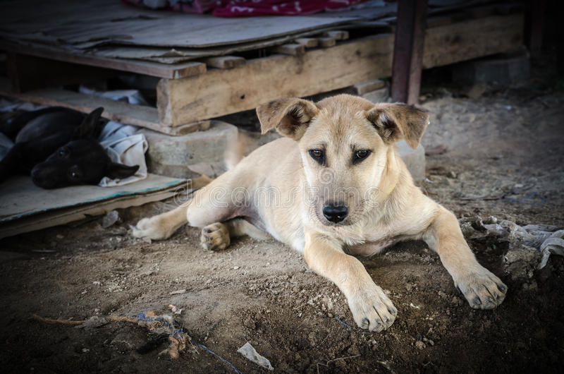狗包装迷路者 免版税库存图片