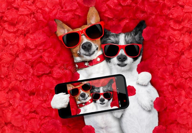 狗华伦泰夫妇在爱的 免版税库存照片
