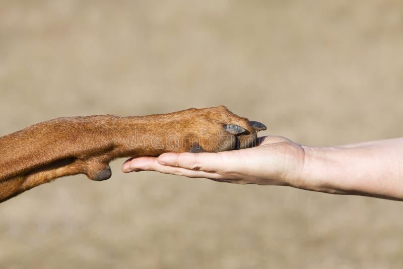狗友谊人与 免版税库存照片