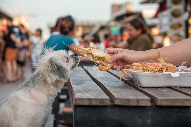 狗吃一个大虾油煎的虾盐饲料宠物所有者 免版税库存照片