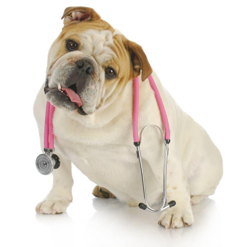 狗听诊器 库存图片