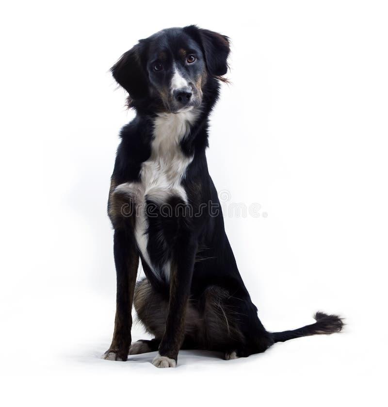 狗听 库存图片