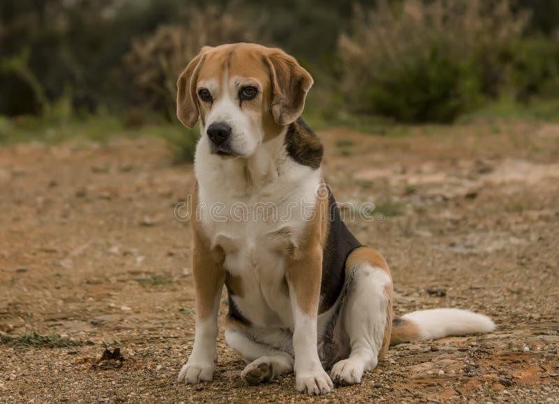 狗和乡下 图库摄影