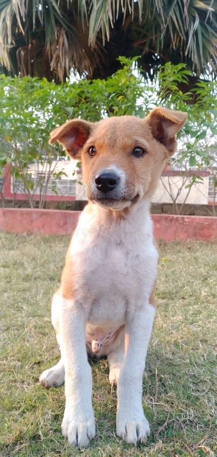 狗和你在印度丹巴德区的公园里找食物 免版税库存图片