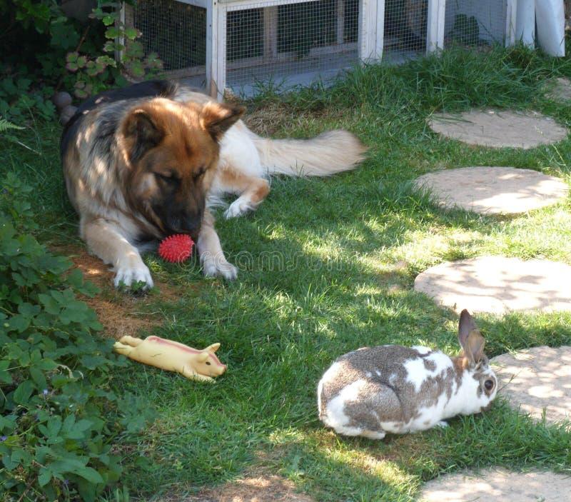狗和兔子-朋友 免版税库存照片