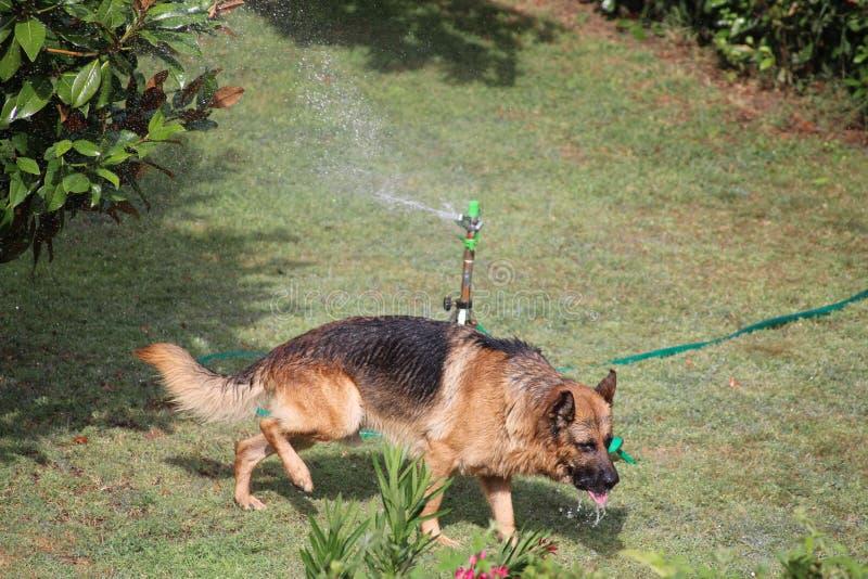 狗和喷水隆头 图库摄影