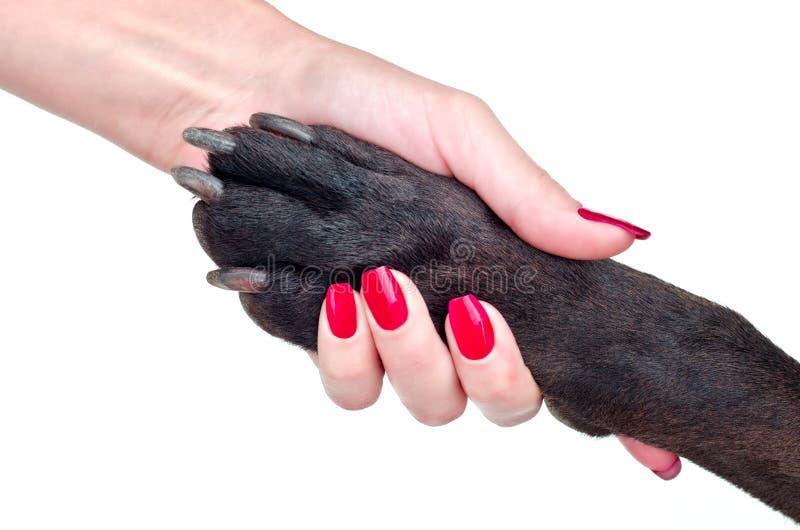 狗和妇女友好的握手  免版税图库摄影