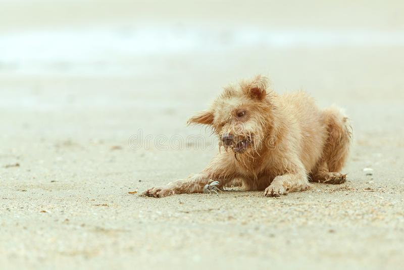 狗和小螃蟹 免版税图库摄影