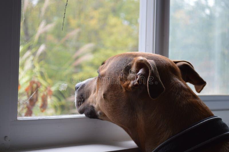 狗和平 免版税库存照片