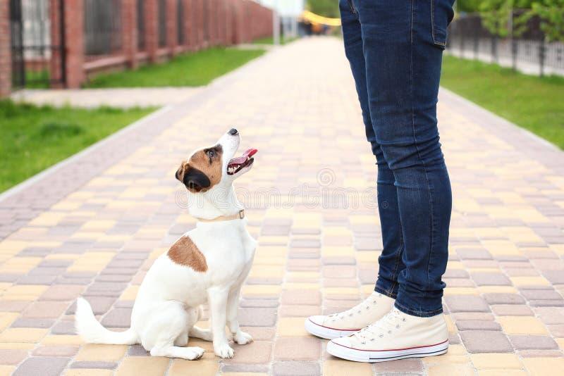 狗和所有者预期步行的杰克罗素狗在公园,在街道,患者和服从上 教育和火车 图库摄影